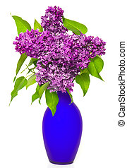 bouquet of lilac flowers in a blue vase on white background