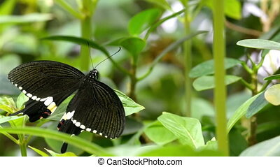 Green plants surrounding the black butterfly