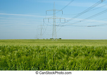 Power Pole - Power pole and barley field