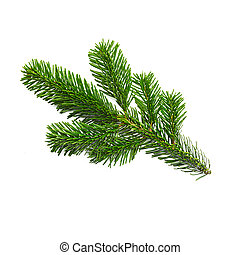 single fir branche - A nature fir branche isolated on white...