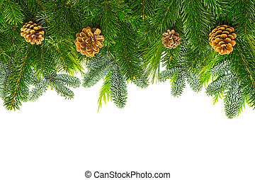 fir branches with pine cones