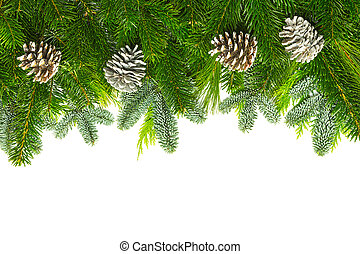 pine branches with pine cones