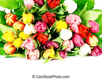 many colorful spring tulips
