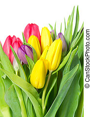 colorful bouquet of fresh spring tulip flowers over white...