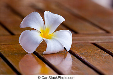 Plumeria Flower - A white plumeria flower sits on a wood...