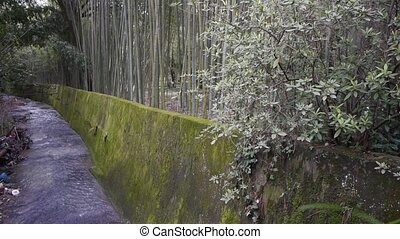 Bamboo on Little River Banks 2 - Bamboo on Little River...