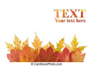 Autumn leaves design element with copy space - isolated