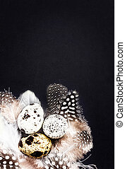 Quail eggs with white feathers on vintage black scratched...