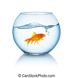 screaming goldfish in a bowl - A fishbowl with a breathing...