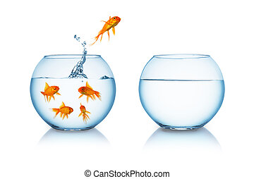 Goldfish jumps in to liberty - A goldfish jumps in to a...