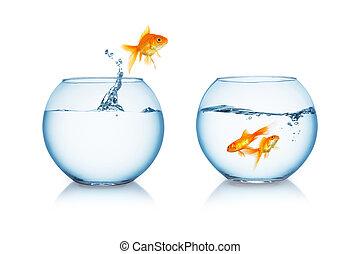 goldfish, saltos, a, el suyo, amigos,