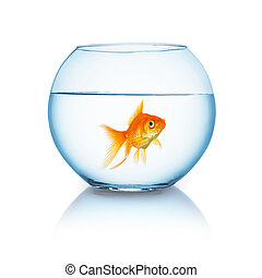 big goldfish in a fishbowl - A fishbowl with a lonely...