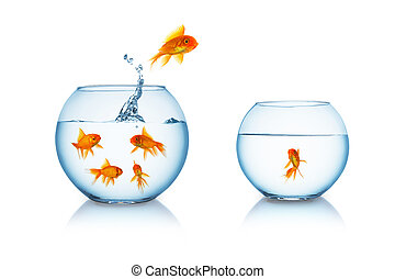 goldfish escapes in a fishbowl - A goldfish jumps in to a...