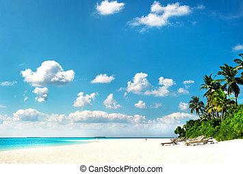 tropicais, ilha, praia, palma