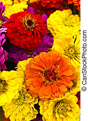Cheerful Flowers - Brightly colored red, orange, yellow and...