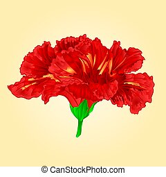 Flower red hibiscus blossom simple