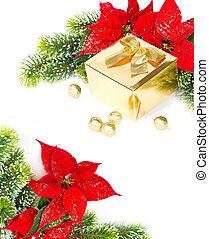 golden gift and red christmas flower poinsettia festive...