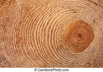 Freshly cut tree log - Cross section of tree trunk showing...