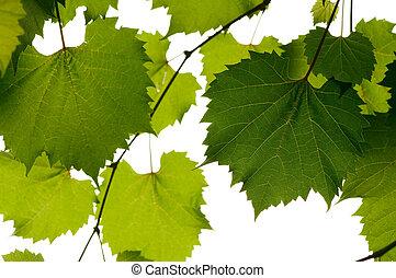 selvagem, uva, folhas, verde, fundo
