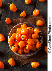 Raw Organic Orange Habanero Peppers on a Background