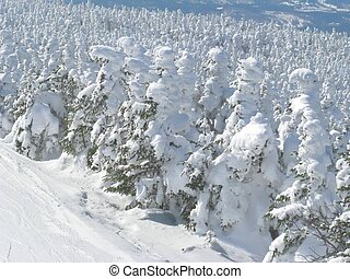 snowy trees - a white winder wonderland of snowy trees