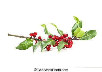 holly and red berries - christmas winter holly and red...