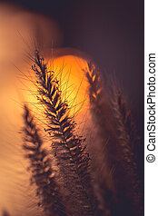 Silhouette of grass flower in sunset time