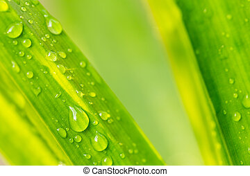 Water drop on green leaf