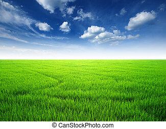 green grass blue sky - rice field green grass blue sky