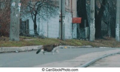 Cat runs across the road - Cat that runs along the road on...