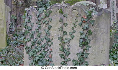 Plants and vines are all over the tombs in cemetery. These...