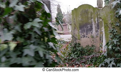 Walkthrough along the cemetery in London This footage is...