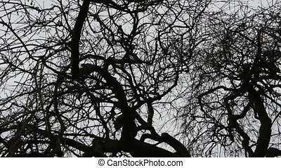 The branches of the leafless tree in the cemetery taken on a...