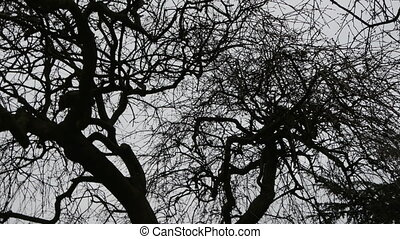 The big tree with curved long trunk and leafless thin...