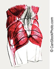 Anatomy of the back - Anatomy of lower back muscles in...