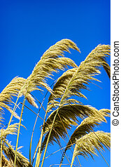 Background of Beauty in nature Golden dry grass