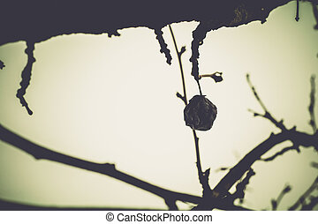 Vintage Leafless Branches - Leafless branches of winter...