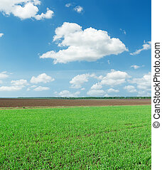 green spring field and white clouds in blue sky