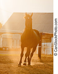 horse runs in paddock with sunset back light