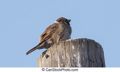 Sparrow - sparrow sitting on a tree stump