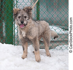 Gray shaggy dog standing on ice on background of green fence