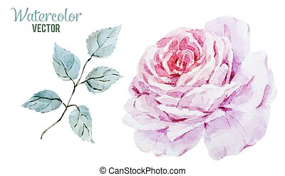 Gentle roses - Beautiful vector image with gentle watercolor...