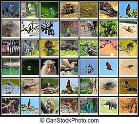 Sri Lanka - The fauna in the park Yala, Sri Lanka safari