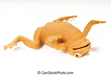 yellow frog - isolated yellow frog with striped on white...