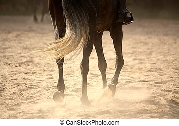 Trotting away horse legs close up in sunset