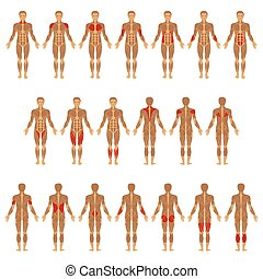 body, muscle - vector muscular human body, muscle man...