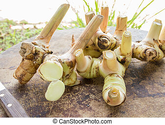 galangal - Galangal herb used in cooking