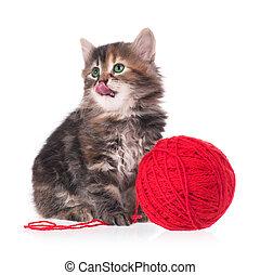 Cute kitten - Cute little kitten with balls of color threads...