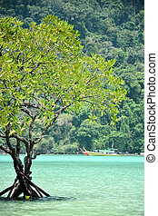 Mangrove tree in the tropical sea of Thailand