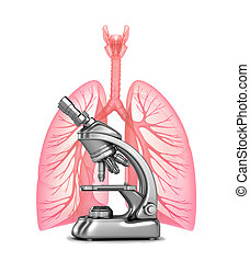 Research of human lungs with and